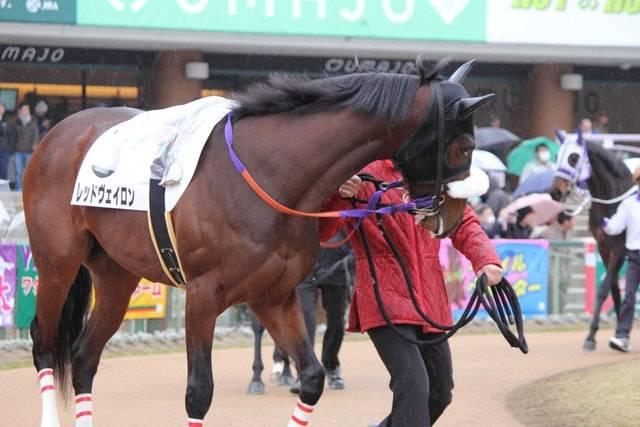 馬体の雰囲気は既に重賞クラスのレッドヴェイロン