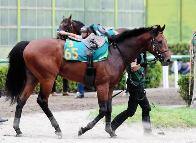 ボリュームが有り見栄えのする馬体