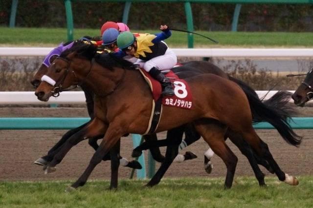 カミノタサハラ(クロウキャニオン2010)