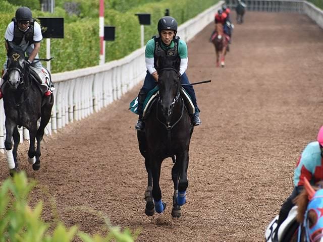 見映えのする馬体で坂路を駆け上がるフランクリン
