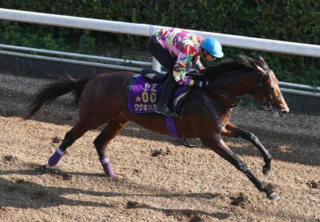 普段から調教で騎乗する藤岡康太騎手が鞍上