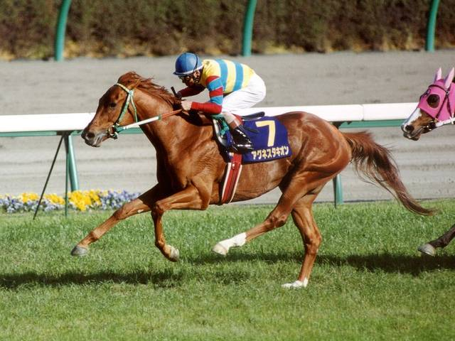 アグネスタキオン(アグネスフローラ1998)