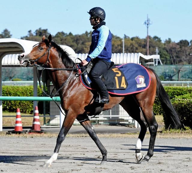 馬体の良さが目を引くシェドゥーヴル