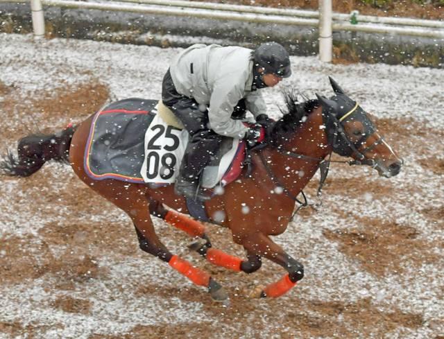 雪の中、勢い良く好調をアピールするルックトゥワイス