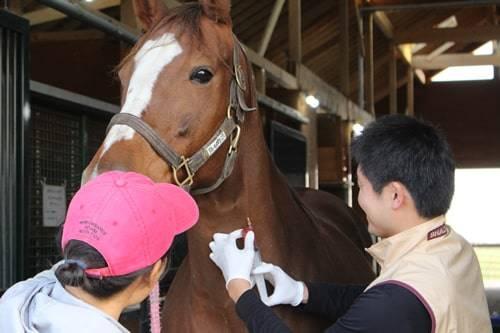 馬にとっては致命傷となりかねないノド鳴り