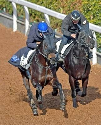 併せ馬で楽に先着するロジクライ(左)