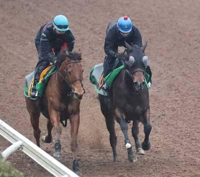 一度も放牧へ出さず在厩調整のミリオンドリームズ(右)