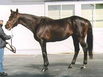 ジェイドロバリー(Number1987)