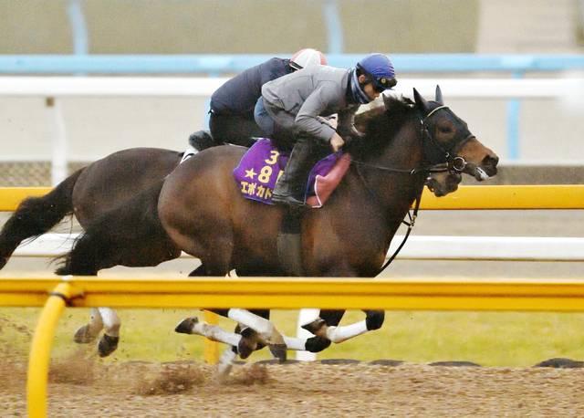 併せ馬できっちり先着を果たすエポカドーロ