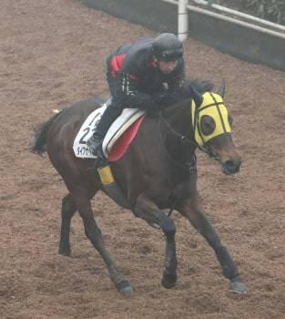 坂路で馬なり、サッと仕上げるダイアナヘイロー