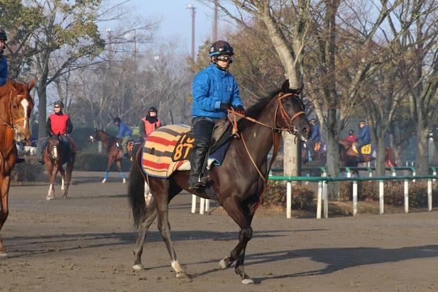 馬体は小柄ながら馬っぷりが目立つマルニ