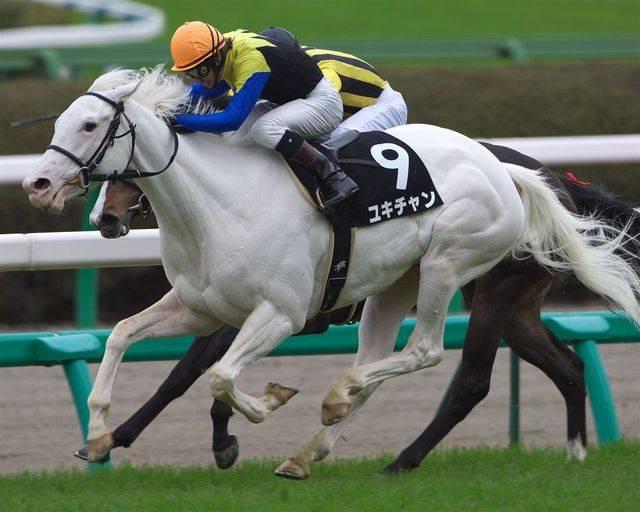 ユキチャン(シラユキヒメ2005)