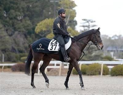 森田直行厩舎3頭出しの1頭、ラブカンプー