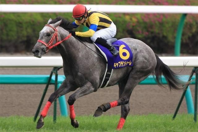 キャプテントゥーレ(エアトゥーレ2005)