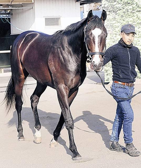 藤沢厩舎期待の外国産馬フォッサマグナ