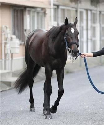 4歳になって馬体に厚みが増したメイショウテッコン