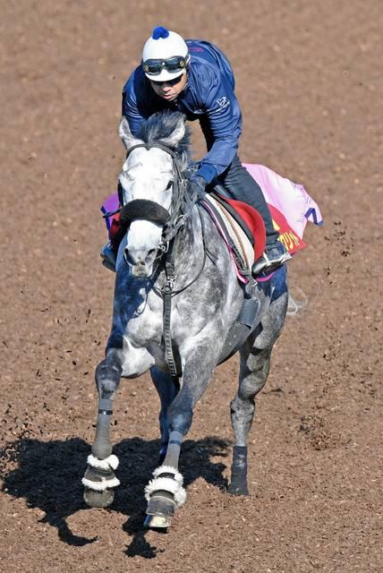 白い馬体を躍動させるアエロリット