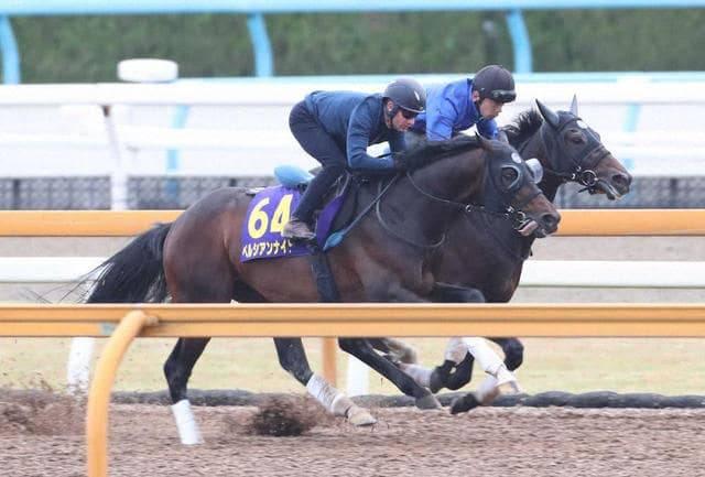 デムーロ騎手を背に併せ馬で追い切るペルシアンナイト