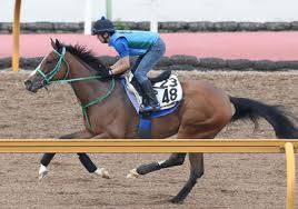 馬なりで調整するも状態は良さそうなモーヴサファイア