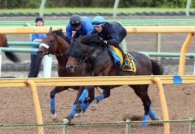 レーン騎手を背に併せ馬で追い切るプロディガルサン