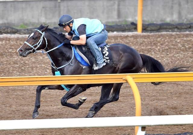 馬体も一回り大きくなって迫力が増したランスオブプラーナ