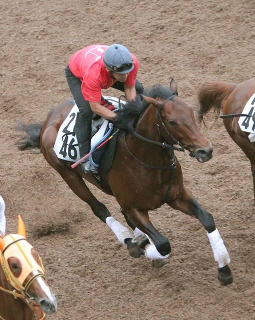 馬なりで坂路ラスト12秒1でまとめたミッキーワイルド
