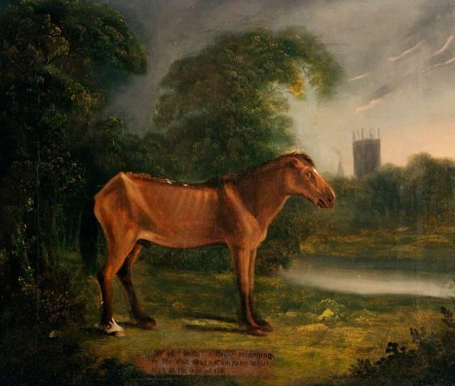 イギリスのばん馬、オールドビリーが世界最高長寿