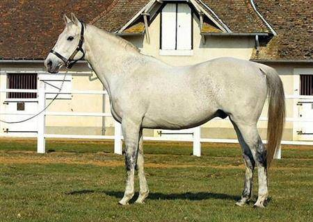 障害用の種馬として33歳まで活躍したテュルジオン