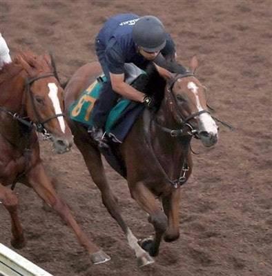 馬なりで併せ馬先着するエレナアヴァンティ