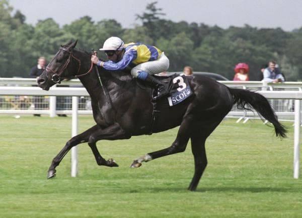 マンデュロ(2008年/131ポンド)