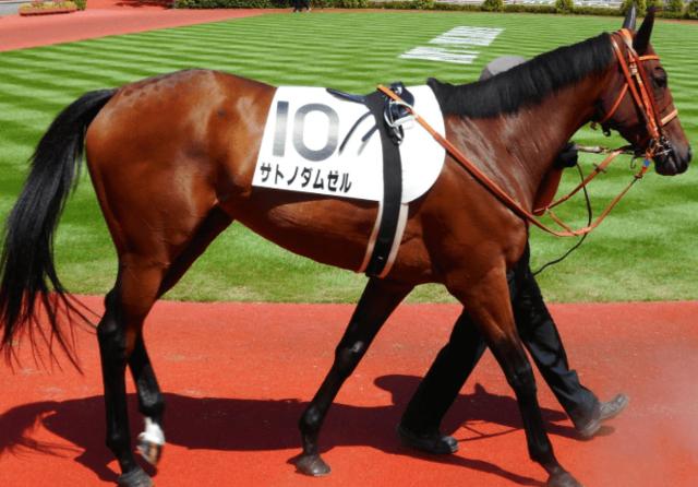 馬体も強化され間隔を詰めて使えるサトノダムゼル
