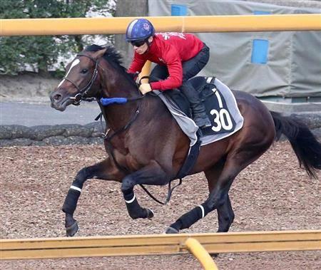 川田騎手を背に絶好の仕上がりを見せるヴェロックス