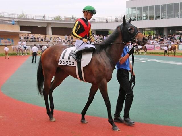 今回も川田将雅騎手とのコンビで夕月特別に臨むタンタラス