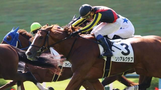 新馬戦ではとてつもない追い込み勝利を飾ったソシアルクラブ