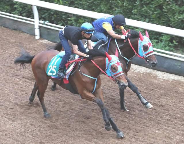 古馬と併せて互角の動きを見せるセウラサーリ(左)