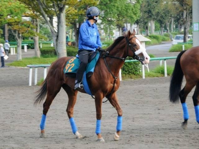 素質馬が集う国枝厩舎でもひと際存在感のあるダノングロワール
