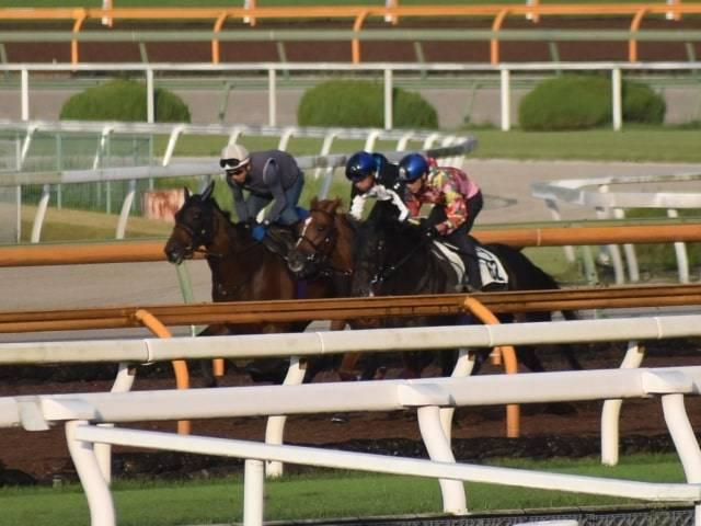オープン馬2頭と併せて互角の動きを見せるヒュッゲ(中)