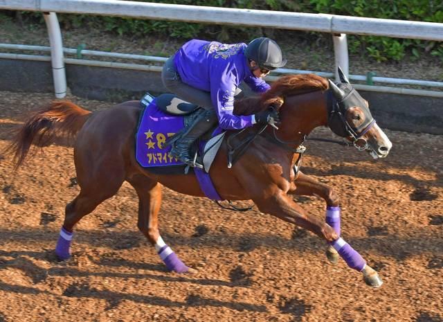 馬体も一回り大きくなって更に迫力が増したアドマイヤマーズ