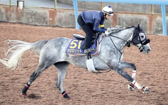 雄大なフットワークと白い馬体が目を引くアエロリット