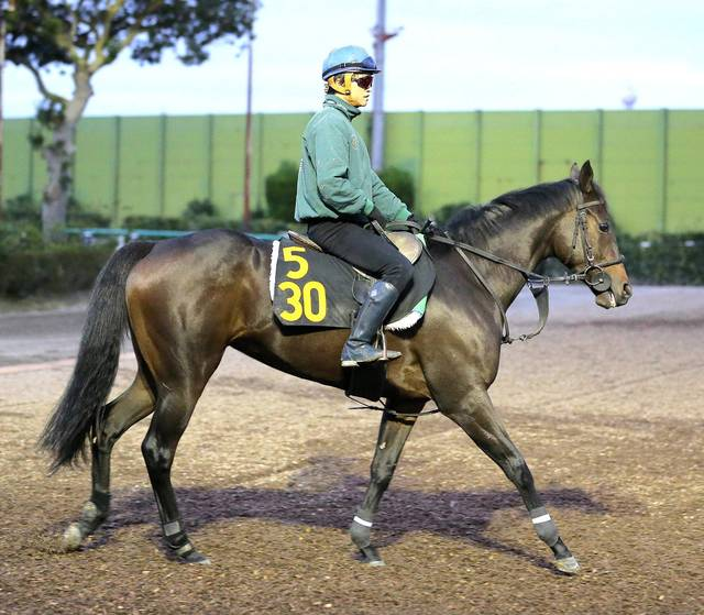 藤沢和雄厩舎の中でも特に期待値の高いサンクテュエール