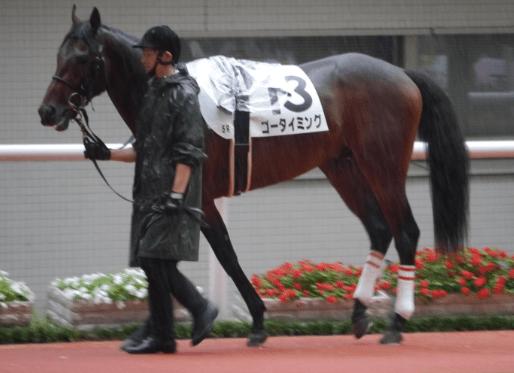 440kgの馬体も走りでは大きく見せるゴータイミング