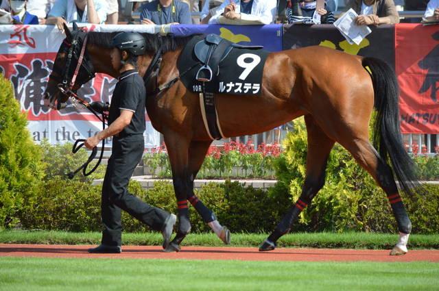 馬体も大きくなり450kg台に突入したルナステラ