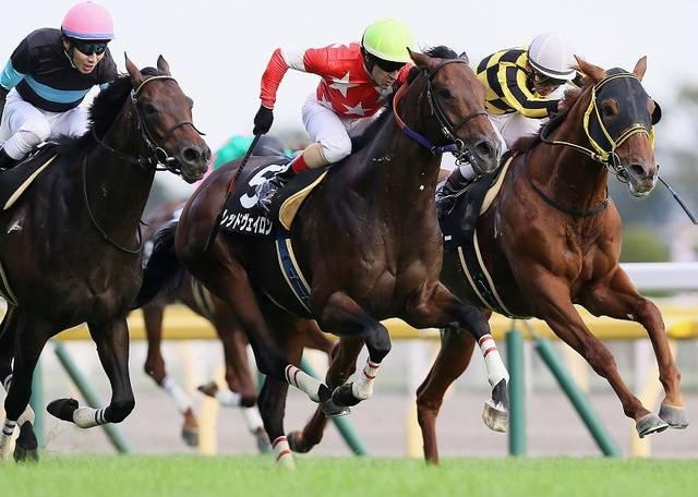 紅葉Sは20㎏の馬体増もきっちり勝ち上がったレッドヴェイロン