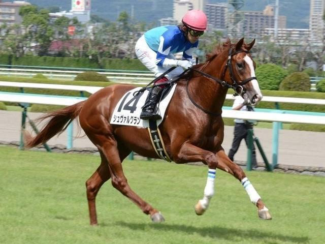 シュヴァルグラン(ハルーワスウィート2012)