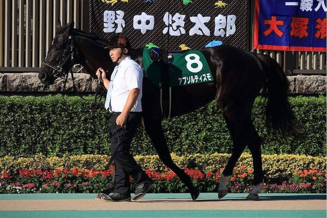 黒く大きい馬体にひと際目が行くアブソルティスモ