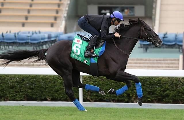 黒い馬体を香港の地で疾走させるグローリーヴェイズ