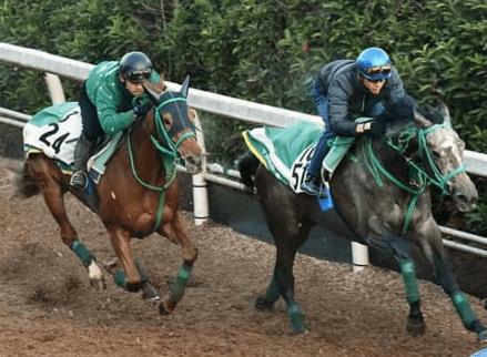 坂路の併せ馬で鋭い動きを見せたエスポワール(左)