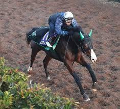 藤岡佑介騎手を背に坂路で抜群の動きを見せたビアンフェ