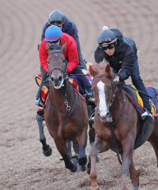 池添謙一騎手を背に最終調整に入ったオーソリティ(左)