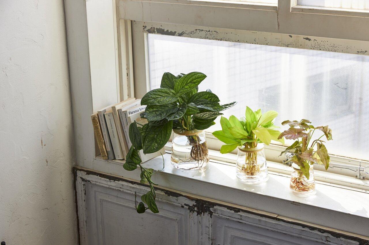 """【プロ推薦】初心者でも育てやすい。""""水耕栽培""""で始める、観葉植物のある暮らし"""